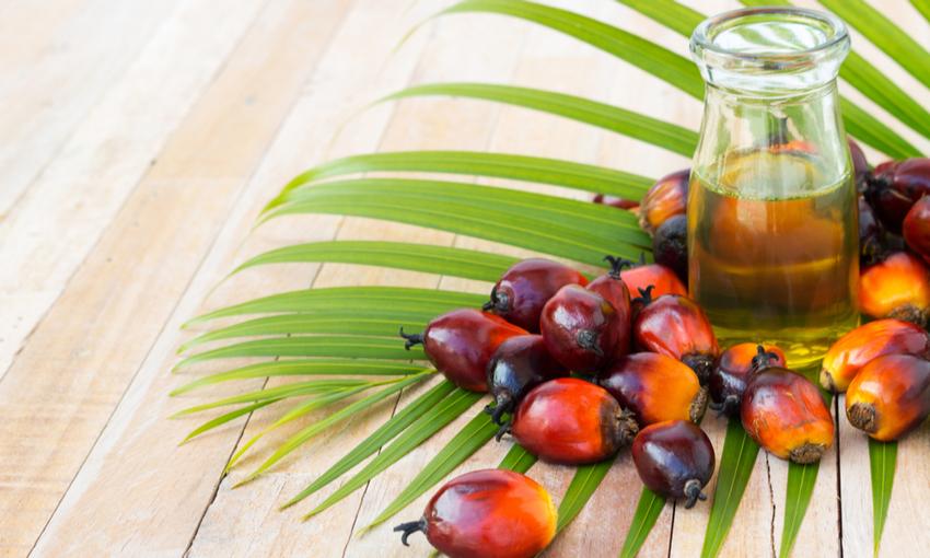 grassi saturi olio di palma