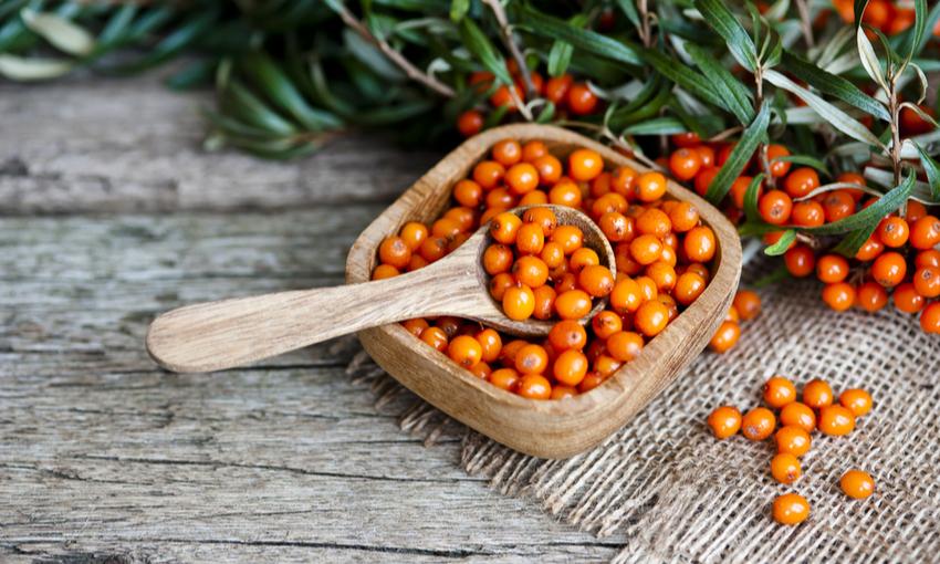 olivello spinoso superfood