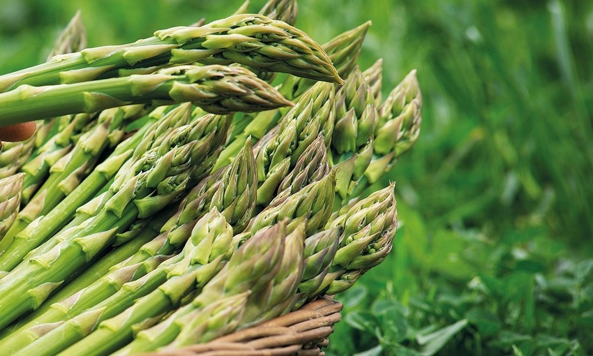 asparago verde di altedo