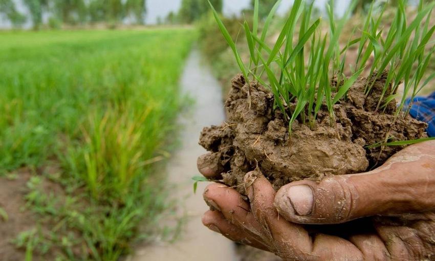 lotta contadina terra