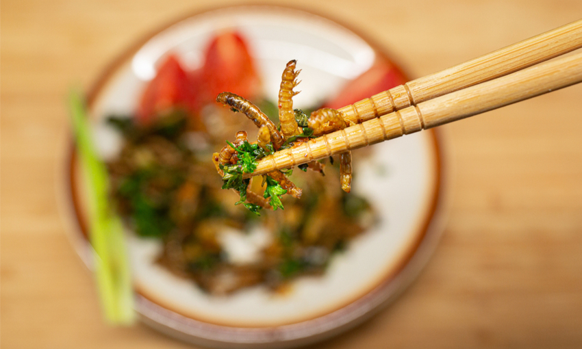 insetti edibili piatto