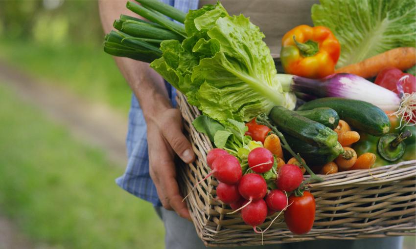 agricoltura bio farm to fork
