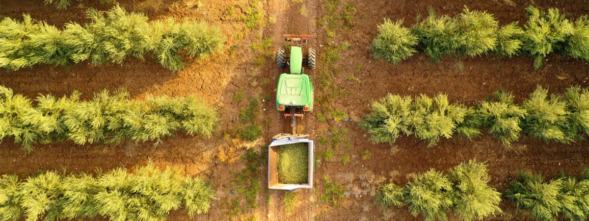 olivicoltura di precisione