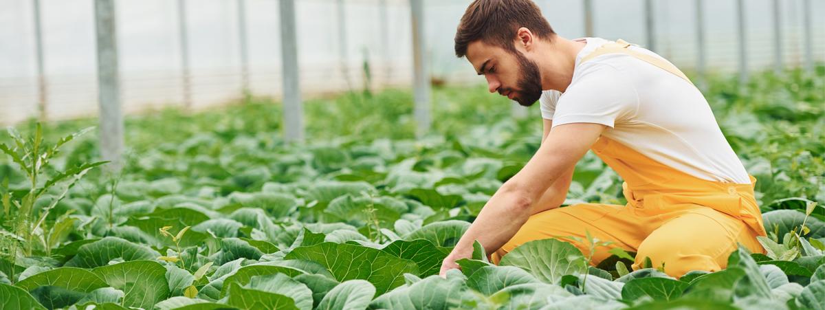agricoltura sostenibile enpaia censis