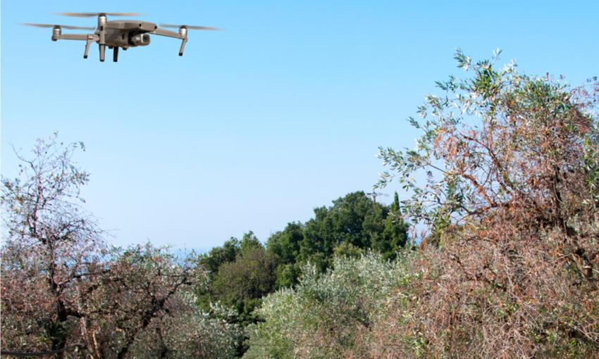 droni olivicoltura