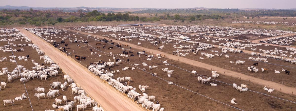 carne e deforestazione