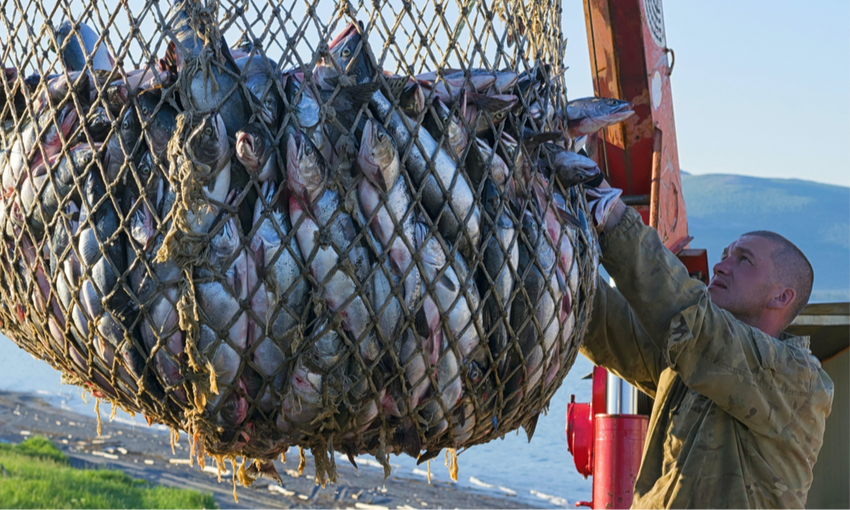 pesca illegale danni
