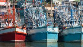 riduzione della pesca