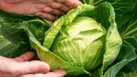 come aprire azienda agricola biologica