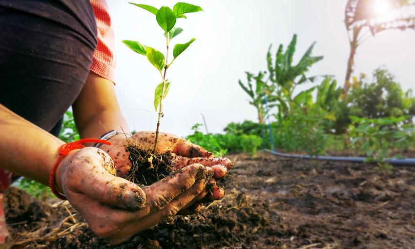 come diventare agricolture bio