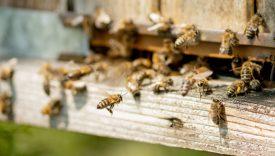 ogni ape conta