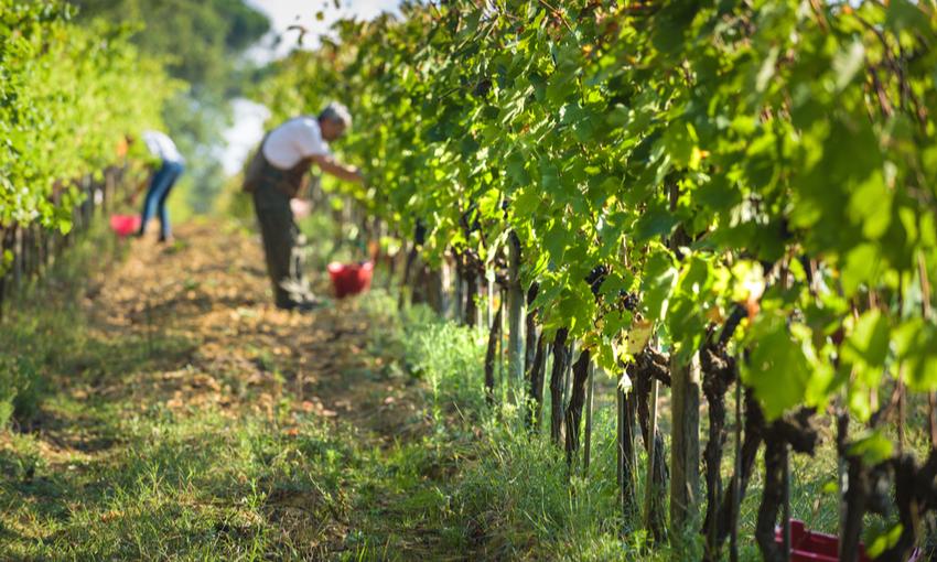 produzione vini bio