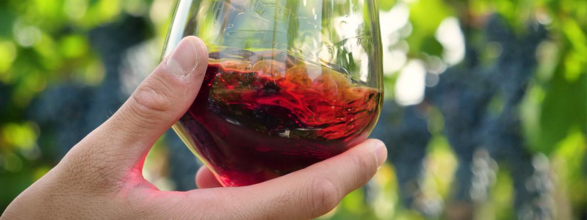 vino biologico italiano